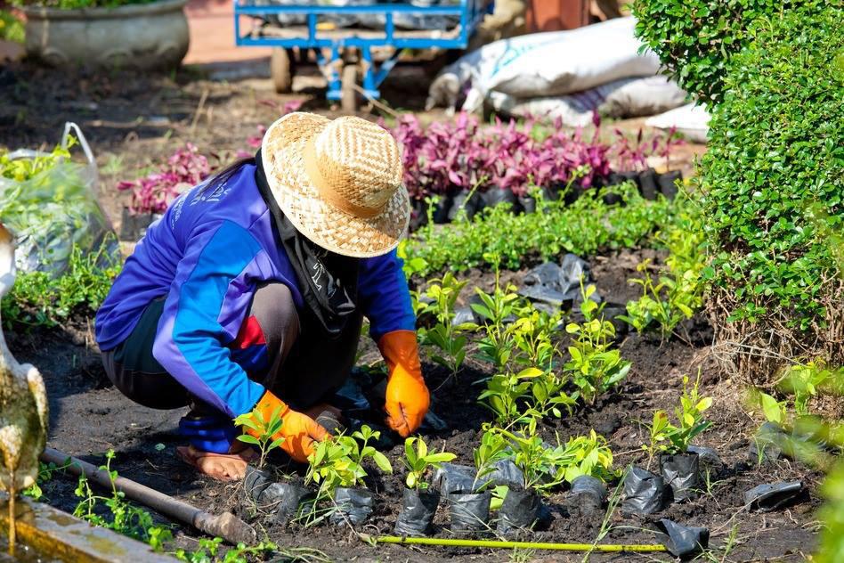 Градинарство - съвети